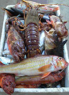 Island Hvar, Dalmatia - Sea food  http://www.discover-island-hvar.com/gastronomy/