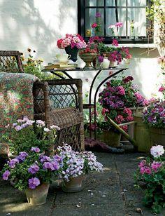 Pelargoni on helppo kesäkukka. Se kukkii pitkään, rakastaa auringon lämpöä eikä pahastu viileitä öitäkään.   Rakkaat pelargonit   Koti ja puutarha