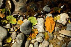 BEACH DEBRIS autumn photography oregon coast nature by BonnieBruno, $30.00