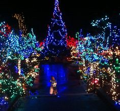 7 Top Christmas Attractions, Festivals, and Events in Vancouver: Festival of Lights, VanDusen Botanical Garden Holiday Lights, Christmas Lights, Christmas Holidays, Canada Christmas, Christmas Tree, Holiday Decor, Stuff To Do, Things To Do, Festival Lights