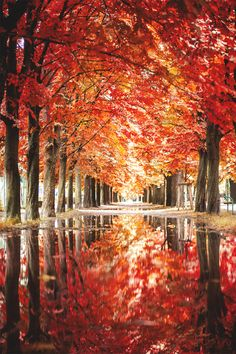 Autumn paints in colors that summer has never seen