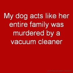 My dog acts like her entire family was murdered by a vacuum cleaner