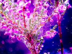 Purple beyond time by Floreina-Photography on DeviantArt