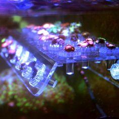 Marine Acrylic Aquarium Coral Racks Bracket Holder Live Fish Tank Suction Cups Latest Fish Tank - Fish Tank for sales Wall Aquarium, Acrylic Aquarium, Aquarium Pump, Aquarium Setup, Diy Aquarium, Aquarium Lighting, Marine Aquarium, Saltwater Aquarium, Aquarium Accessories