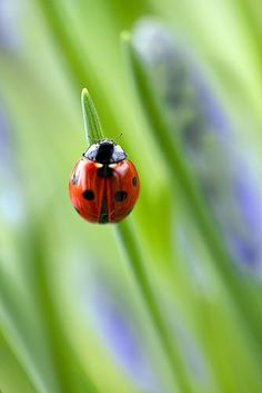 Ladybugs make me smile every time I see them!!!
