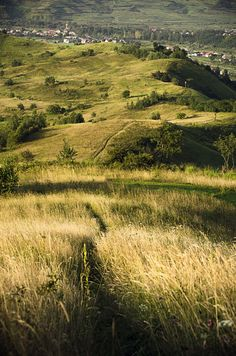 Path on the hill by Ionut Vicol on 500px