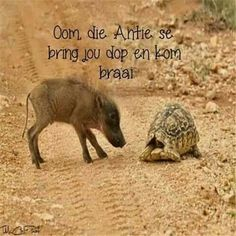 Animals Are Beautiful People, Afrikaanse Quotes, Happy Thoughts, Positive Quotes, Funny Quotes, Africa, Jokes, Inspirational Quotes, Tortoise