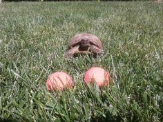 Las tortugas también apoyan la campaña anti-taurina de Lush