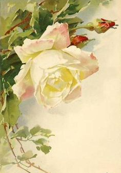 New drawing flowers vintage catherine klein Ideas Catherine Klein, Art Floral, Floral Prints, Vintage Rosen, Vintage Art, Vintage Drawing, Illustration Blume, Rose Pictures, Rose Art