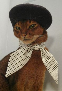 Yep, that's a cat in a beret. You're welcome (Photo by CatAtelier via Bust Magazine)
