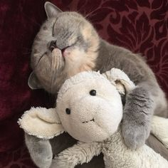 Elizabeth Snuggling with her Stuffed Animal (Source: http://ift.tt/1GqbpQ8)