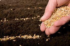 #Homestead - Small-scale grain raising