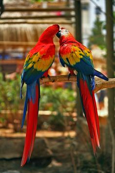 5 Popular Small Pets breed Parrot Parrots are colorful, lively and playful pets. Kinds Of Birds, All Birds, Cute Birds, Pretty Birds, Beautiful Birds, Animals Beautiful, Cute Animals, Angry Birds, Tropical Birds