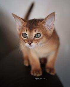 My Friend, Friends, Kitty, Nice, Cats, Instagram, Animals, Gatos, Animais
