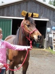Sunny is an adoptable Arabian Horse in Quilcene, WA. This cute hot little mare has been though 60 days of professional training (natural horsemanship) and loves to go, go, go.  She needs an experience...