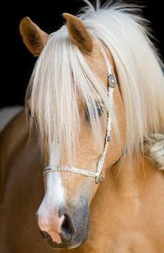 The Enchanted Cove Palomino horse. Please also visit www.JustForYouPro… for colorful, inspirational art and stories. Thank you so much! Most Beautiful Horses, All The Pretty Horses, Animals Beautiful, Palomino, Horse Photos, Horse Pictures, Palamino Horse, Haflinger Horse, Andalusian Horse
