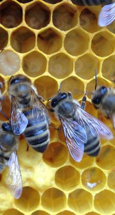 Wow - wonderful bees - with so many different tasks - and hives - and honey. PROTECT!