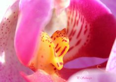 Orchidee  kreativesbypetra Petra, Fruit, Photos, Food, Pictures, Meal, The Fruit, Photographs, Eten
