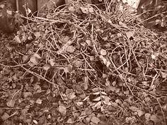 Firewood-2 (Autumn 2013)