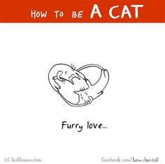 http://lastlemon.com/cats/cat280/ HOW TO BE A CAT: Furry love