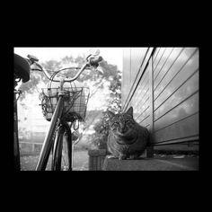 https://flic.kr/p/BjisZt   Tank December 2015  #cat #photograph #blackandwhitephotography