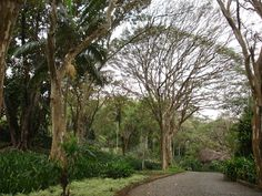 Roberto Burle Marx (August 4, 1909, São Paulo – June 4, 1994, Rio de Janeiro) was a Brazilian landscape architect (as well as a painter, print maker, ecologist, naturalist, artist and musician) whose designs of parks and gardens made him world famous. He is accredited with having introduced modernist landscape architecture to Brazil. He was known as a modern nature artist and a public urban space designer.  Roberto Burle Marx's father was an emigrant from the city Trier in Germany. His…