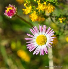 https://flic.kr/p/z6ejGm | September more | September light still illuminates the flowers and life flows