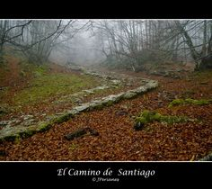 El Camino de Santiago --at one point I had the goal of hiking from the east of Spain to Santiago De Compostela on the west coast, that will probably have to wait a decade or so... :(