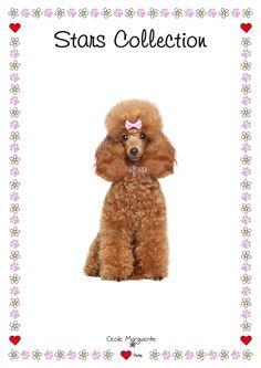 Collari per Cani in Pelle Morbida con applicazioni di Cristalli e Borchie a Stellina. Soft Leather Dog Collars with White Crystals and Star-shaped Studs. #cmlovepets #cutedogs #dogaccessories #luxurypet #animallovers #puppy #pets #petlovers #petslove #petslover #doglove #doglovers #accessoripercani #accessorilussopercani #petsaccessories #petsaccessory #cani #cane #dog #dogs #luxurydogaccessories #modacani #lussocani #leathercollar #collaricani #madeinitaly #crystalsdogcollar…