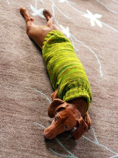 such a long little doggie by flint knits, via Flickr