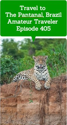 "Travel to The Pantanal, Brazil –Amateur Traveler Episode 405  ""The Pantanal is a basin that is the world's largest wetlands. It is about ten times the size of the Everglades. It's really a great site to see wildlife."" The Pantanal is a UNESCO World Heritage Site."