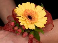 Home coming corsage how -to video....creating a gerbera daisy wrist corsage for homecoming and a coordinating gerbera boutonniere