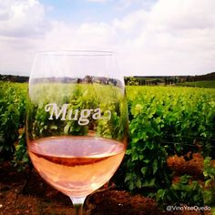 Our wines combine tradition and modernity with a strong personality. Let's start the day with glass of Muga! Bodegas Muga, Strong Personality, Start The Day, Wines, Vineyard, Alcoholic Drinks, Let It Be, Glass, Check