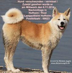 Hund verschwunden - vermisst !