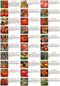 Рекомендуемые сорта томатов