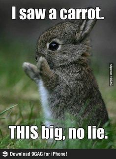 I saw a carrot!