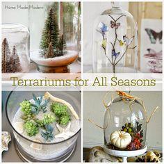 Home Made Modern: Terrariums for All Seasons