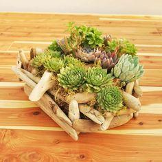 succulent planting ideas (13)