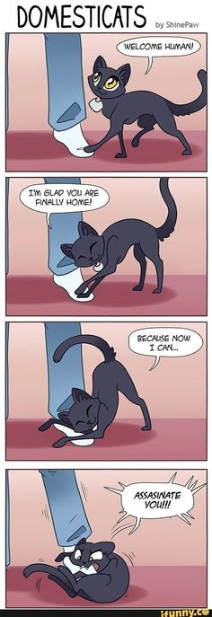 Some cats are playful rascals. My cat will talk to me about when she wants to be feed Funny Animal Memes, Cute Funny Animals, Funny Animal Pictures, Funny Cute, Cute Cats, Funny Jokes, Hilarious, Cat Comics, Funny Comics