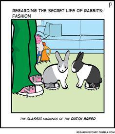 #bunny #rabbit #bunnies #fashion