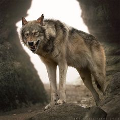 """Summer growled at a wolf who was walking toward her. """"Stay away from here!"""" She yelled as it approached. She attacked the wolf, pinning it to the ground until she realized it was you jumping off quickly. """"I-I'm sorry! I didn't know!"""" She yelped jumping back looking down (Open RP)"""