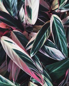 I mean, these colors   #succulents #greenhouse #plants #dscolor #dsfloral