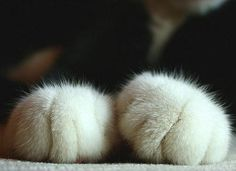 Cotton ball paws