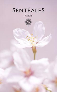 Intense Source cream. Cherry blossom.