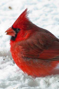 crosstimberlake:  Angrybird