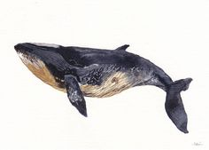 Minke Whale Archival Print by unitedthread on Etsy