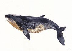 Minke Whale Archival Print by unitedthread on Etsy