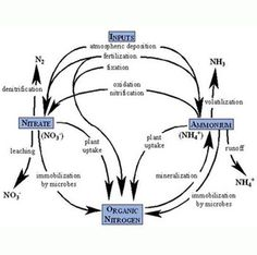 Explain Nitrogen cycle and Carbon cycle With Diagrams