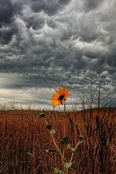 storm clouds, prairie underneath