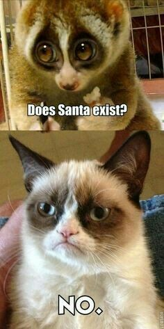 Tard the Grumpy Cat ruins Xmas for the Slow Loris. Grumpy Cat Quotes, Funny Grumpy Cat Memes, Cat Jokes, Funny Animal Jokes, Funny Animal Pictures, Cute Funny Animals, Animal Memes, Cute Cats, Funny Cats